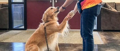 Furry friends find a new role