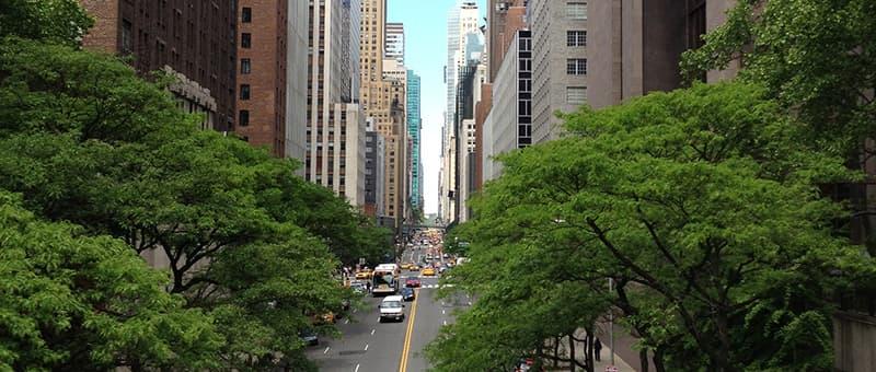 tree streetscape